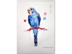Blue Budgie Postcard Print